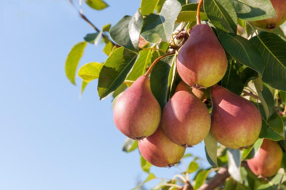 Keuzegids-crisis? Hbo's mógen low hanging fruit niet laten hangen