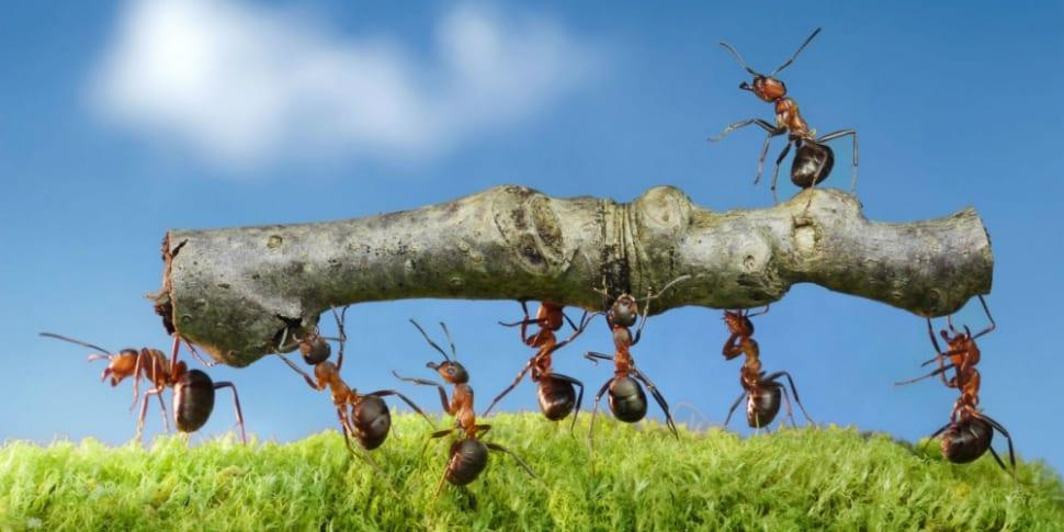 Een sterke bedrijfscultuur als basis voor succes