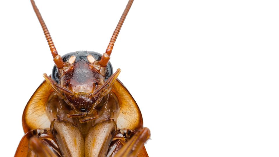 'De funnel is de kakkerlak der marketingconcepten'